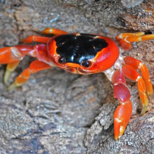 Land Crab's avatar