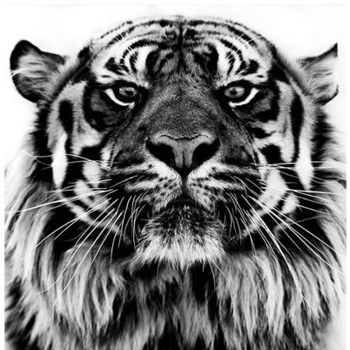 The Tiger.'s avatar