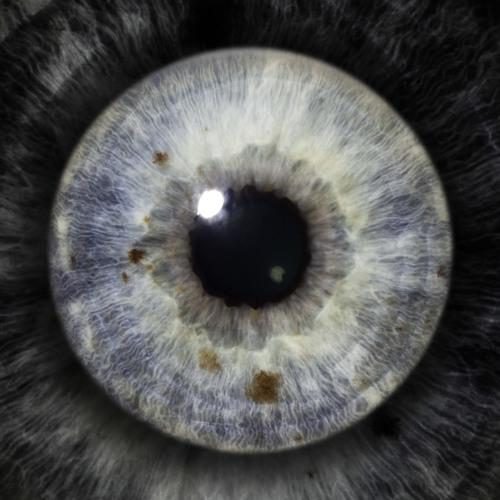 Democrit's avatar