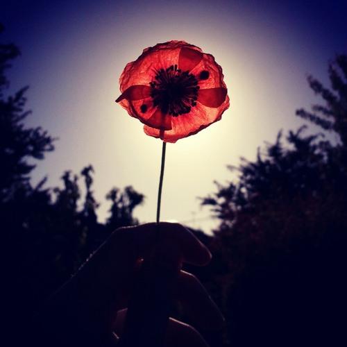 *Wild~Flower*'s avatar