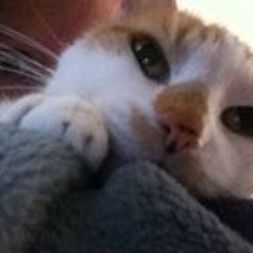 Kendra Ann Simmons's avatar