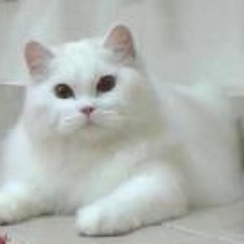 Bubu Munchiee's avatar