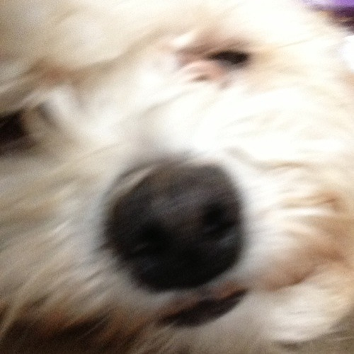 Jazibo's avatar