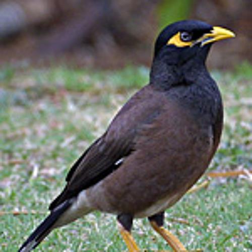 Min0r Bird's avatar