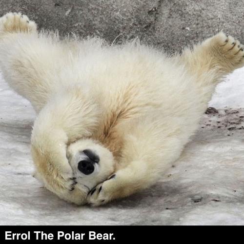 Errol The Polar Bear.'s avatar
