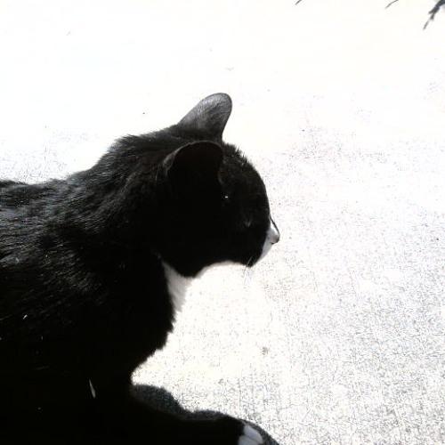 summerjp's avatar