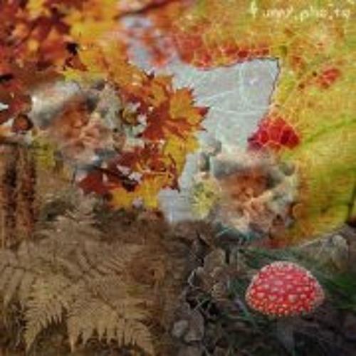 Durye 원시 나무's avatar