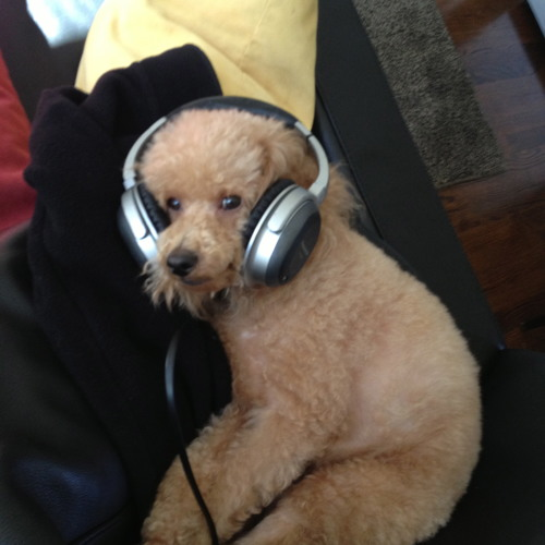 DJ McGee ✈'s avatar