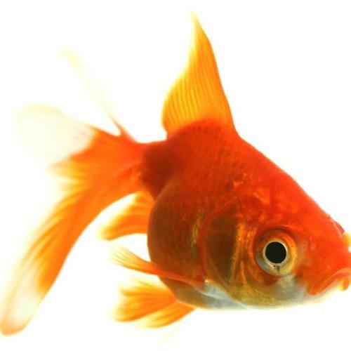 fishsmarts's avatar