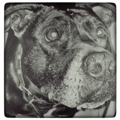 Rumba Negra's avatar