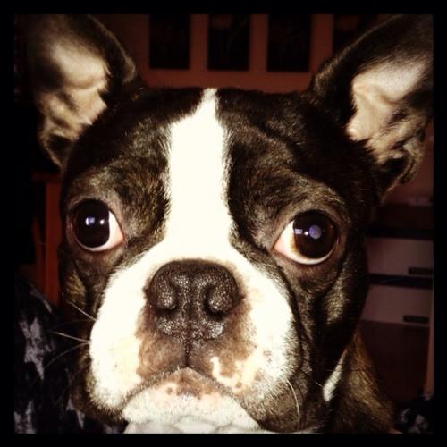 oll.jones's avatar