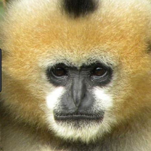 Mike Rainforest's avatar