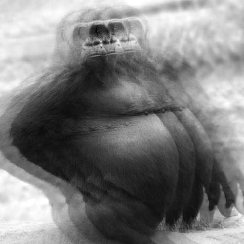gorillagorillagorilla's avatar