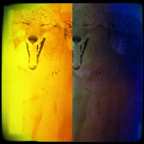 coyote & coyote's avatar