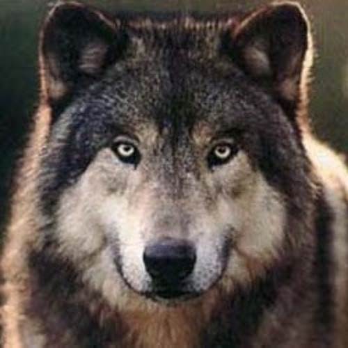 kobu moka wolf's avatar