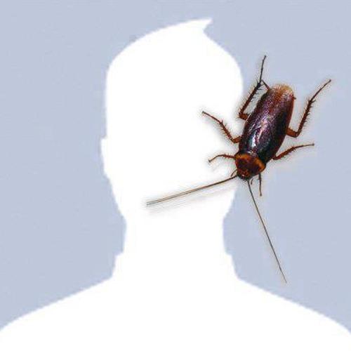 lodymamahit's avatar
