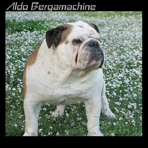 Aldo Bergamachine's avatar