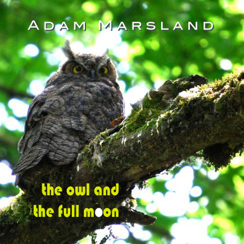 The Owl And The Full Moon's avatar