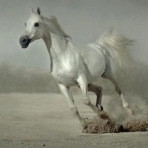 ImmortalArabian's avatar