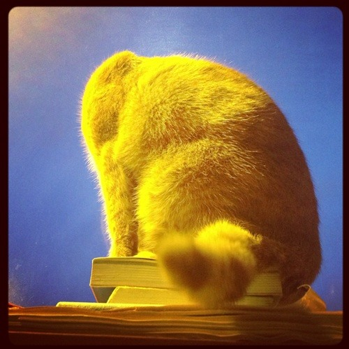 David Smulders's avatar