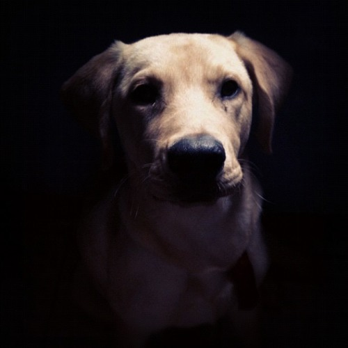 henriiquesantos's avatar