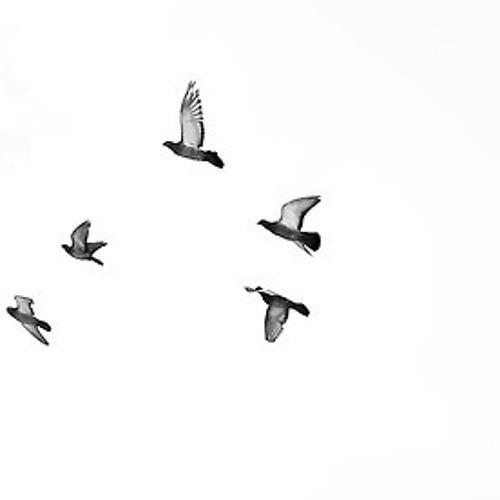 An Authority On Birds's avatar