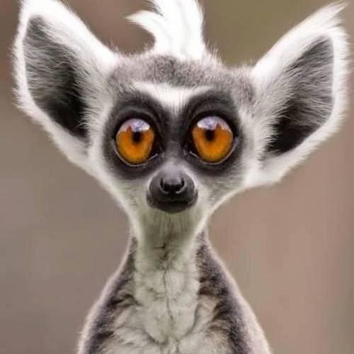 Guido Wollnik's avatar