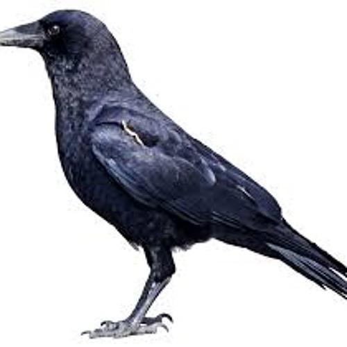RigelStewart's avatar