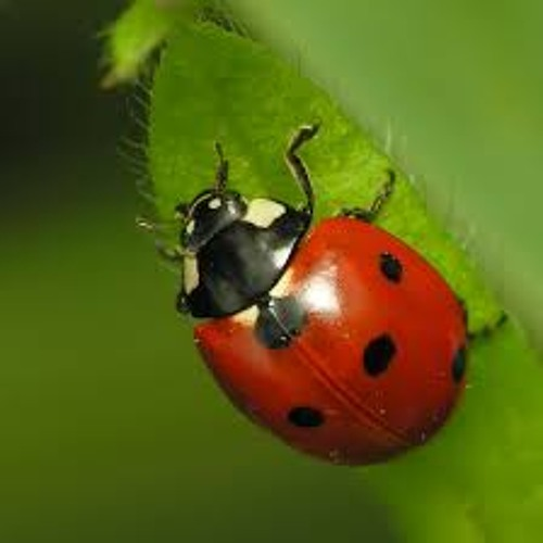 Lady Bug 4's avatar