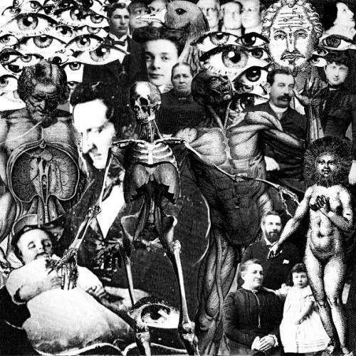 TURGID ANIMAL's avatar