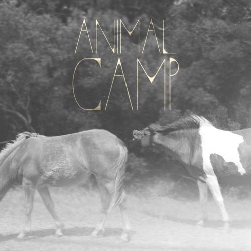 The Animal Camp's avatar