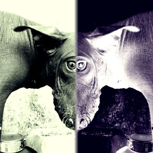 durazo's avatar