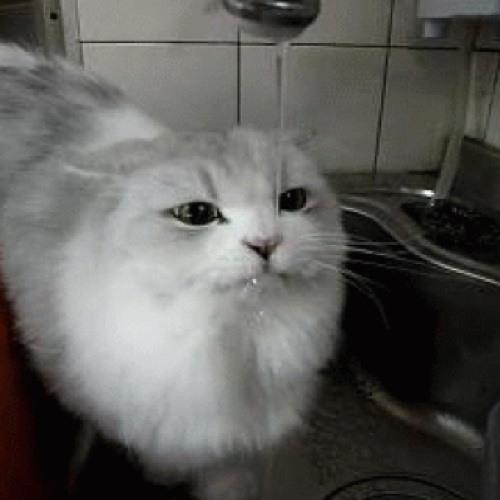 AAsterisKK's avatar