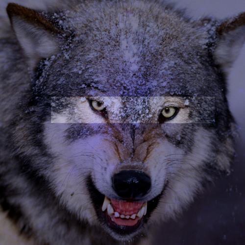 kicksteady's avatar