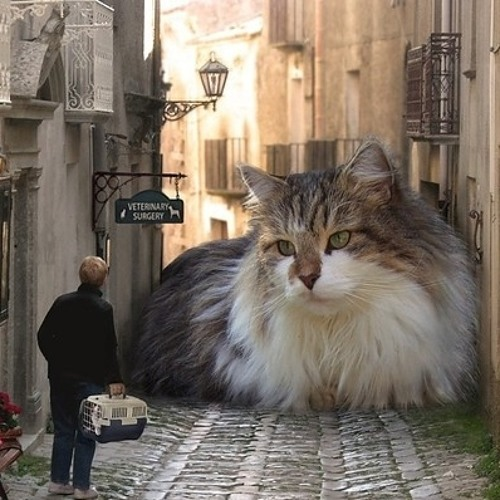 City Cat's avatar