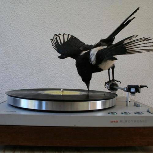 DJ Birdie's avatar