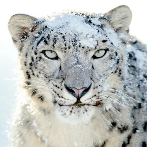 Gerald Snowy's avatar