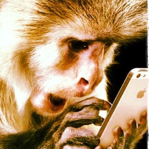 Anthony Kalolo's avatar