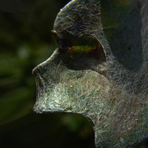 Andger van der Land's avatar