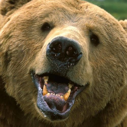 lew.bear's avatar