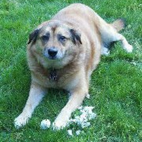 Bark Woof's avatar