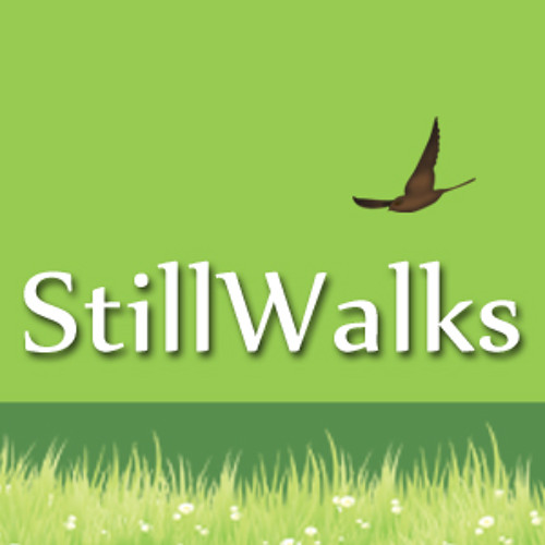 stillwalks's avatar