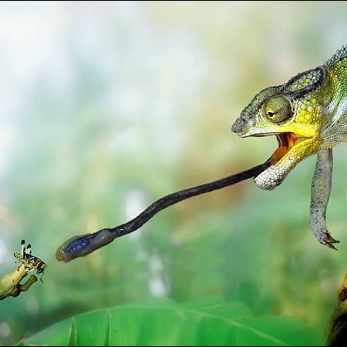 Chamaleon's avatar