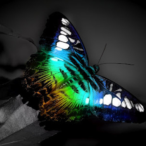 -Butterfly highway-'s avatar