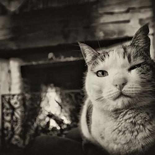 Cat in Heat Studios's avatar