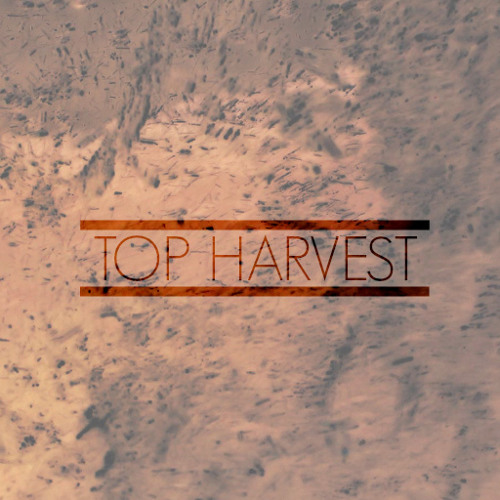 Top Harvest's avatar