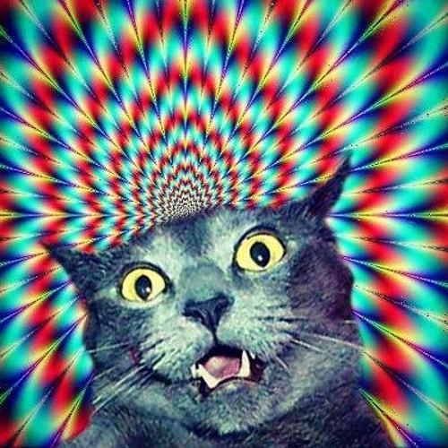cat Ak47's avatar
