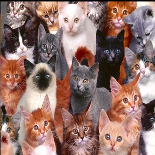 i<3. kittens's avatar