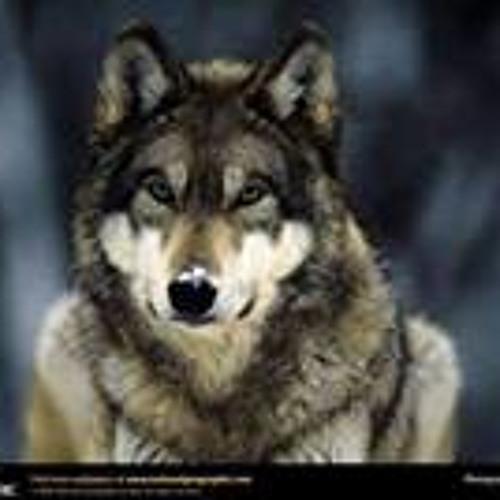 Samh Said's avatar