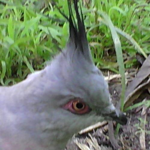 morphogenesis's avatar